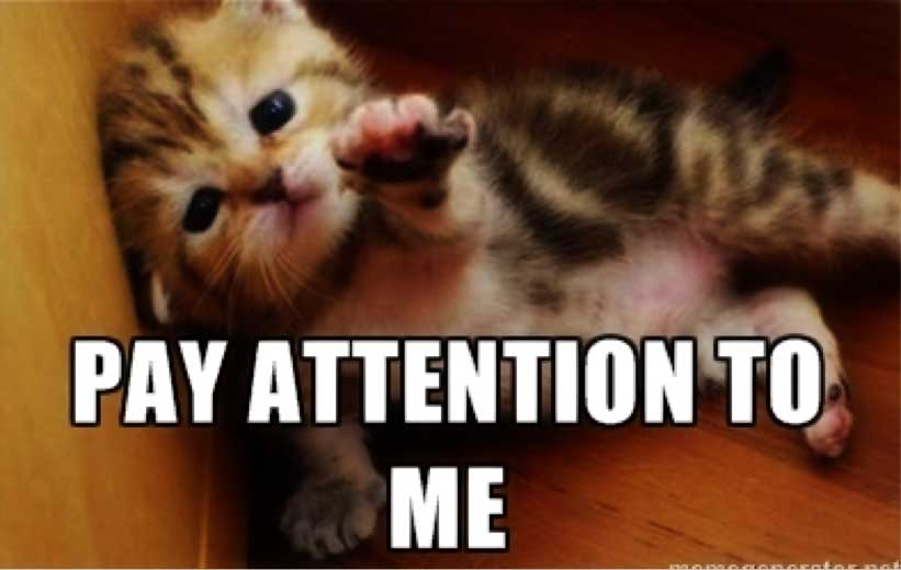 Chat pay attention